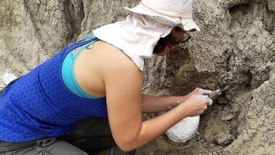 Photo of Corrientes: hallan restos de un perezoso gigante de entre 30.000 y 50.000 años de antigüedad