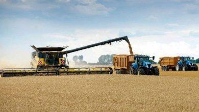 Photo of Sensible incremento de la superficie sembrada de trigo en La Pampa