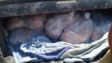 Photo of Interceptan y decomisan vehículo con 350 kilos de carne transportada en forma ilegal
