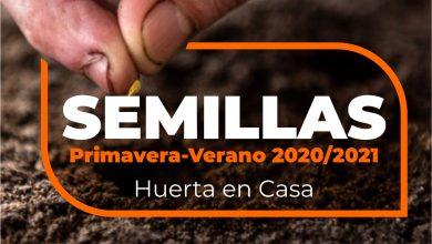 Photo of Entregan semillas en Castex para hacer huerta en tu casa