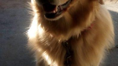 Photo of Murió Catriel, uno de los perros que buscaba drogas en Castex