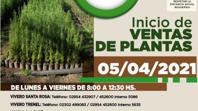 Photo of Reabren los Viveros Forestales de la Provincia. Mirá los precios